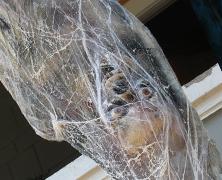 Cocooned Spider Victim