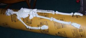 Skeletal Columns-1