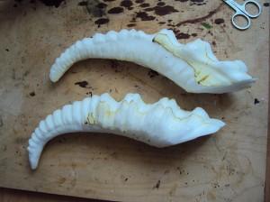 ermelyns-horns-b3