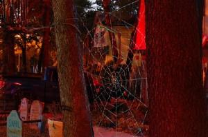 giant-orb-spiderweb-b4