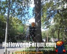 Giant Orb Spiderweb